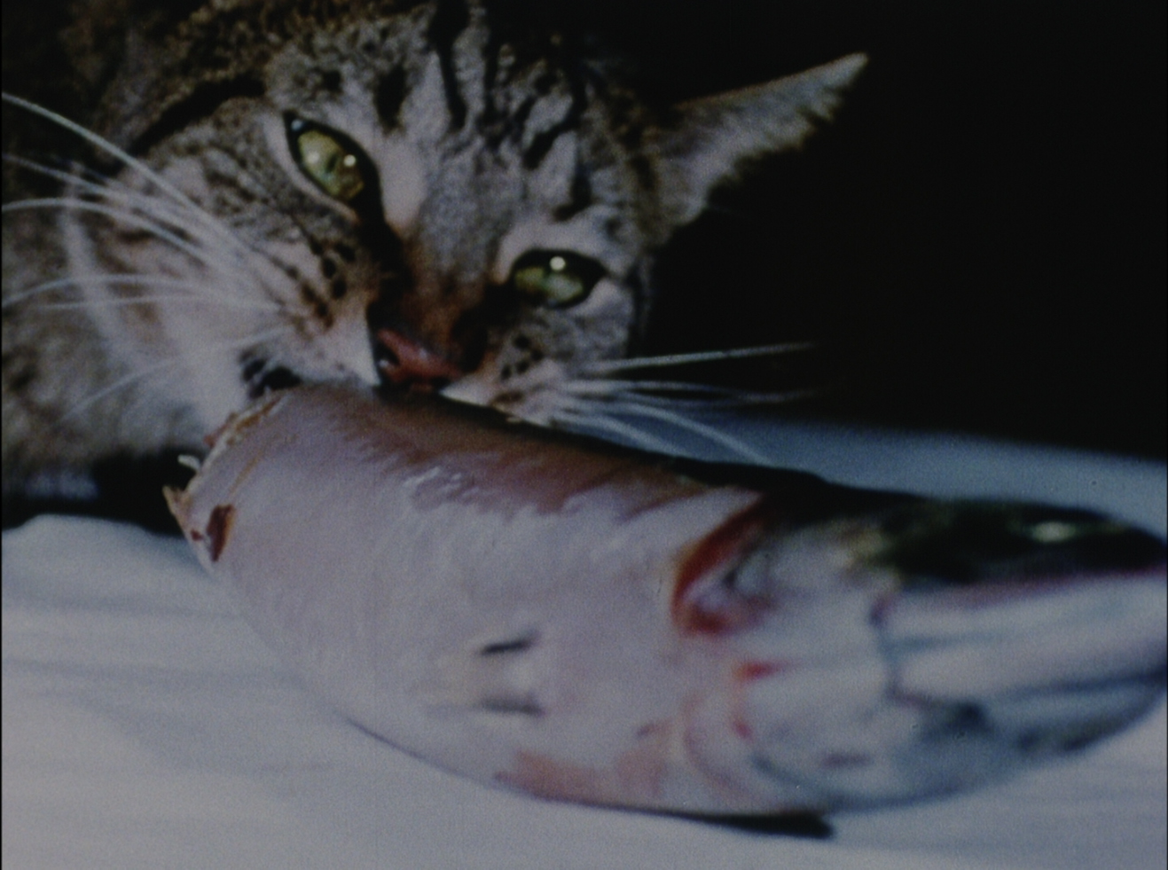 Cat Food - 1968, Joyce Wieland - a cat eating a fish